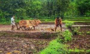 Farmer Law Insider
