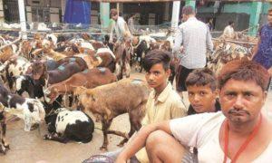 Goats Man and Children