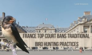 France Top Court bans Traditional Bird Hunting Practicesbird Law Insider