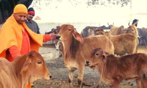 Allahabad HC Cow Protection Hindu Fundamental Right- law insider